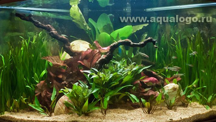 Электрооборудование для аквариума ...: skidkimoscow.ru/action/detail.php?ID=513